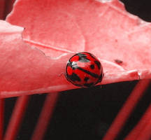Red by blackrose-oz