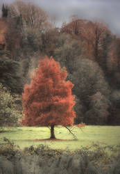 Red Tree by lornamacdonald