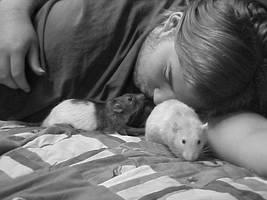 Boyfriend and Rats by silversunset