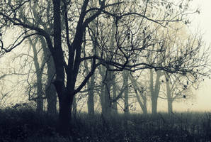 Fog by Su58