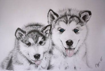 two.huskies by carpathiangirl