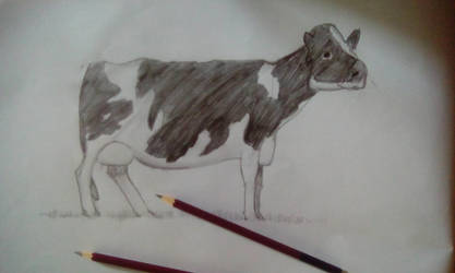Cow - Traditional Drawing by BlueStylArt