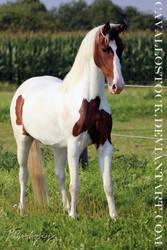 Princess_Of_Liberty_1 by cavallostock
