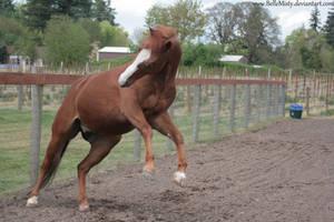 Horse Stock630 by BelleMisty