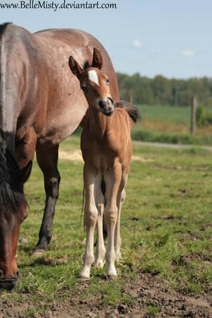 Horse Stock651 by BelleMisty
