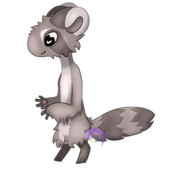 Raccoon - DTR [Bagbeans] by MamylTheComet