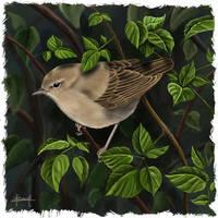 Garden Warbler (Sylvia borin) by Tifaeris