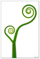 Green Plant by dam-yan