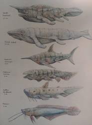 Deltan marin species by skarrh