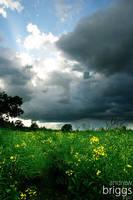 Cloudburst by cardinal