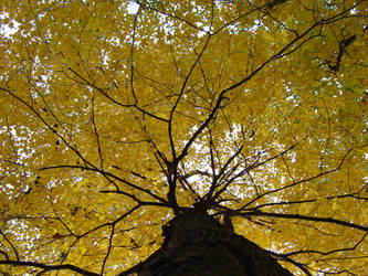 fall tree by onlytape