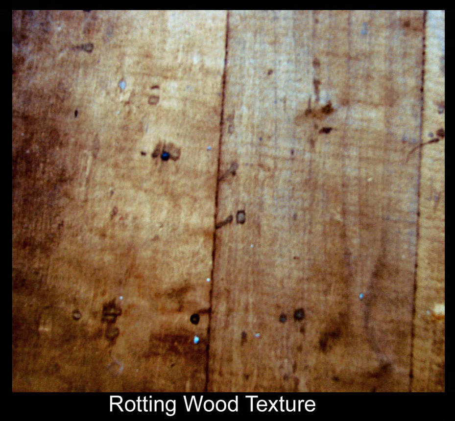 Rotted Wood Texture by Polly-Stock
