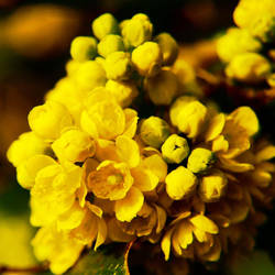 Yellow Promise by Pytak