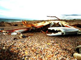 Faint Crab by Alexir563