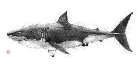 Great White Shark by gunneos