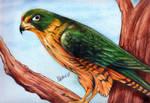 Bird (colored pencils) by ihsans-Art