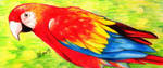 Parrot (Colored Pencils) by ihsans-Art