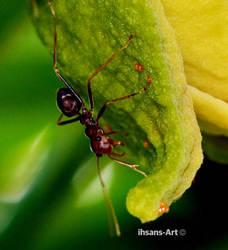 Ant 2 by ihsans-Art