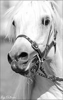 Horse 2 - Cropped by Only-A7sas