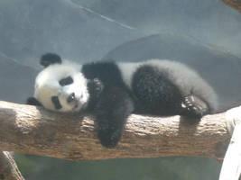 Sleeping Baby Panda by rosegirl123