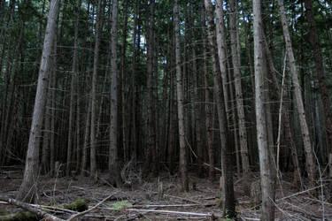 Dead Forest Stock by leeorr-stock