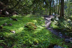 Moss Forest 1 by leeorr-stock