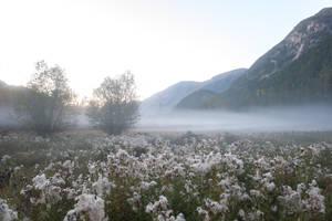 Misty Meadow Stock by leeorr-stock