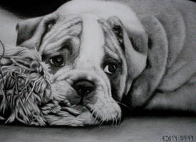 Bulldog puppy by tacsitimea