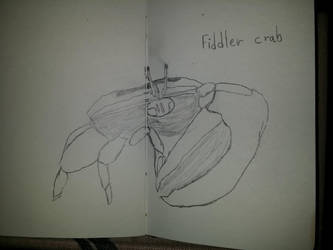 Fidler Crab by AWildKittyAppeared