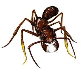 Paraponera clavata by Antlife-Antworks