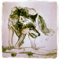 Wolf - Watercolour Study - 1 by shvau4