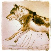 Wolf - Watercolour Study - 2 by shvau4