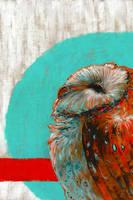 Barn owl series - 3 by shvau4