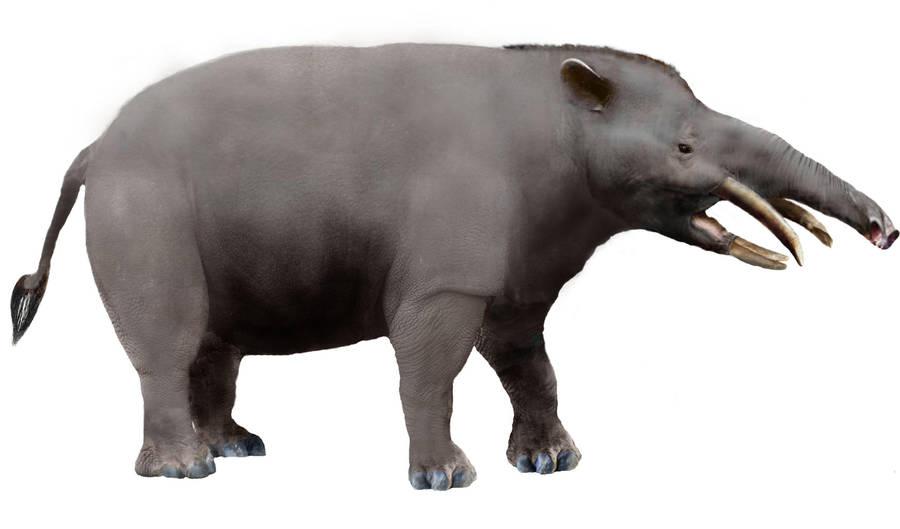 Granastrapotherium WIP 2 by Zimices