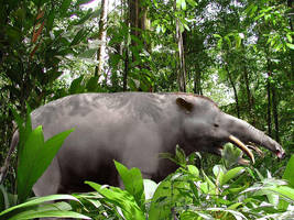 Granastrapotherium_forest by Zimices