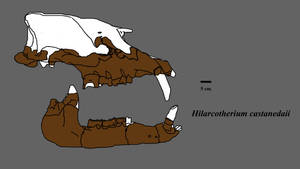Hilarcotherium by Zimices
