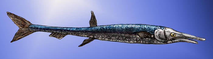 Candelarhynchus by Zimices