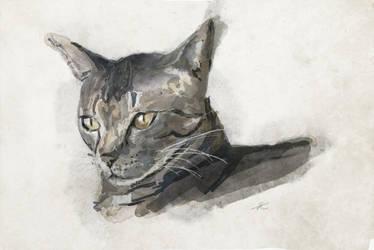 Portrait of a friend's cat by Theotenai