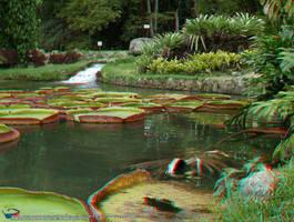 Jardim Botanico, RJ 07JUN09 70 by rbcampos