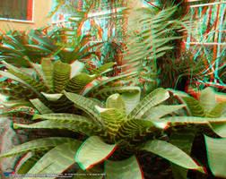 Jardim Botanico, RJ 07JUL09 02 by rbcampos