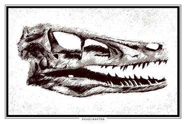Velociraptor Skull by FabledCreative
