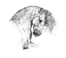 Iberian Stallion by Jag6201