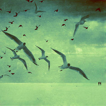 Seagull Dreams by FauSTiNa06
