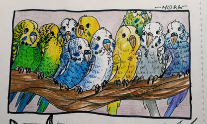 Parrots by DittoMay