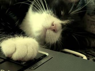 Kitty by MusikandHPfan