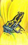 Amazon Poison Dart Frog by mrinx