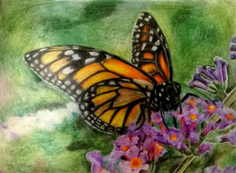 Crayola Monarch Butterfly by mrinx