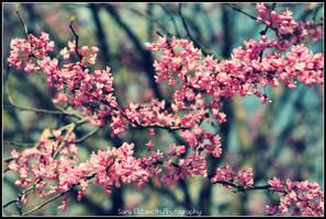 Hello Spring by LilSaraBeth
