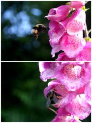 Working Bee by medicorefluff
