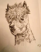 Llama Head in Ink Pen by CPTRHM